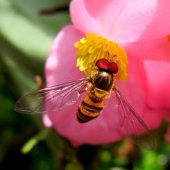 RICOH RICOH GX200で撮影した植物(赤)の写真(画像)