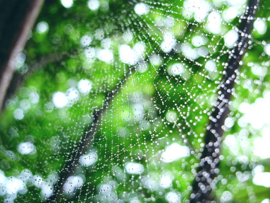 蜘蛛の巣位滴