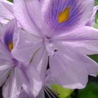RICOH RICOH GX200で撮影した植物(薄紫)の写真(画像)
