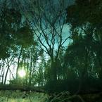 RICOH RICOH GX200で撮影した風景(池の世界)の写真(画像)