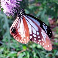RICOH RICOH GX200で撮影した(蝶)の写真(画像)