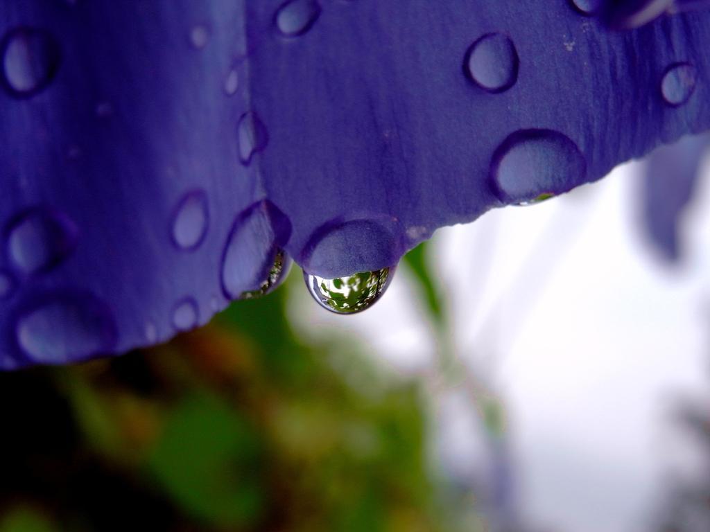 紫のカーテン