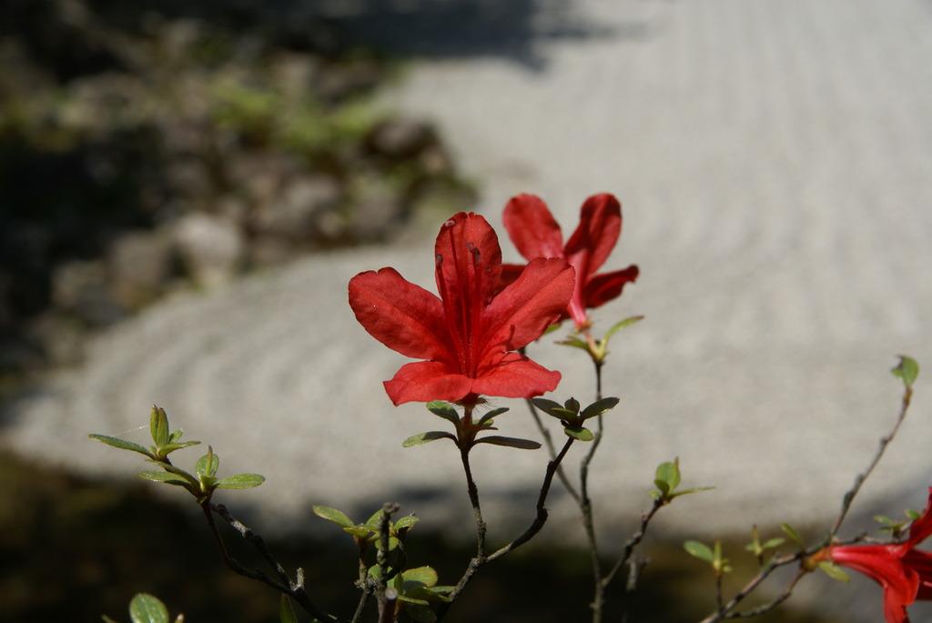 石の庭の花