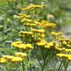 黄色い可愛いお花