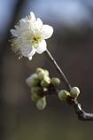 2010年 花の撮り始め