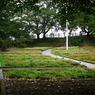 PENTAX PENTAX K-7で撮影した植物(将棋公園の花畑)の写真(画像)