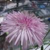 花のつぶつぶ