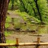 PENTAX PENTAX K-7で撮影した動物(雨の樹の下で。)の写真(画像)