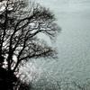 湖畔の午後