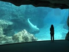 Welcome to Aquarium