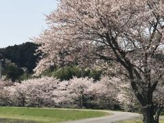 春を愛でる路