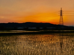 茜色_Rice fields