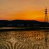 茜色_Rice fields
