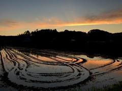 Truck  in rice fields