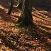 冬支度の森