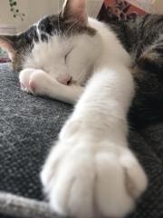 クローズアップ猫