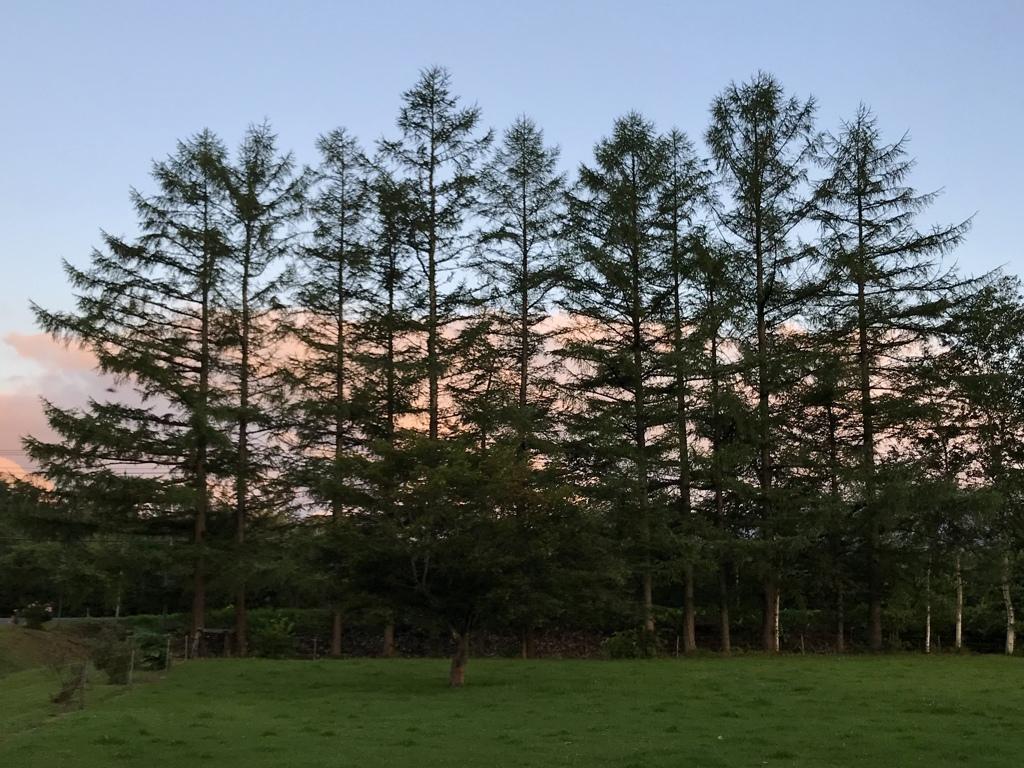 夜明け前の西空