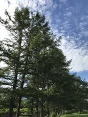 防風林と青空