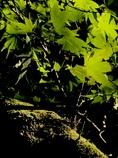 昼下がりの木漏れ陽