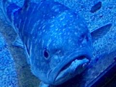 動かない魚