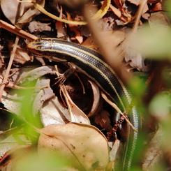 CANON Canon EOS Kiss X2で撮影した動物(色黒だけど、スベスベつやつやお肌)の写真(画像)