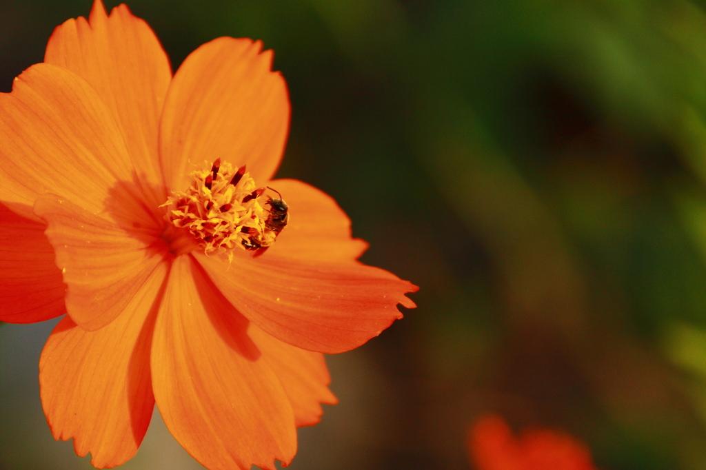 花粉まみれで花粉症にはならないの? IMG_4867a