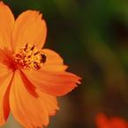 CANON Canon EOS Kiss X2で撮影した(花粉まみれで花粉症にはならないの? IMG_4867a)の写真(画像)