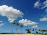 ヤシと雲の整列