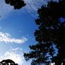 CANON Canon EOS Kiss X3で撮影した風景(空の珊瑚礁)の写真(画像)