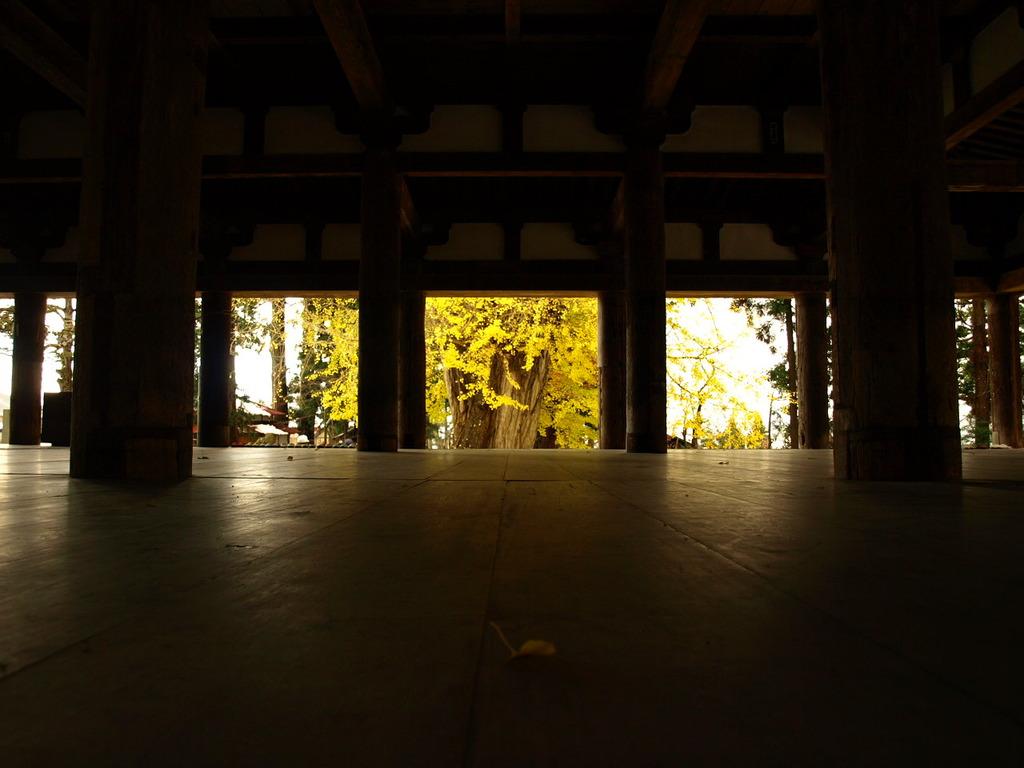 新宮熊野神社長床と大銀杏