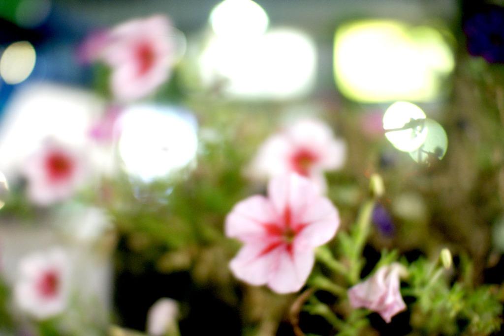 聖地に咲く花