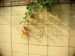 wall & flowers
