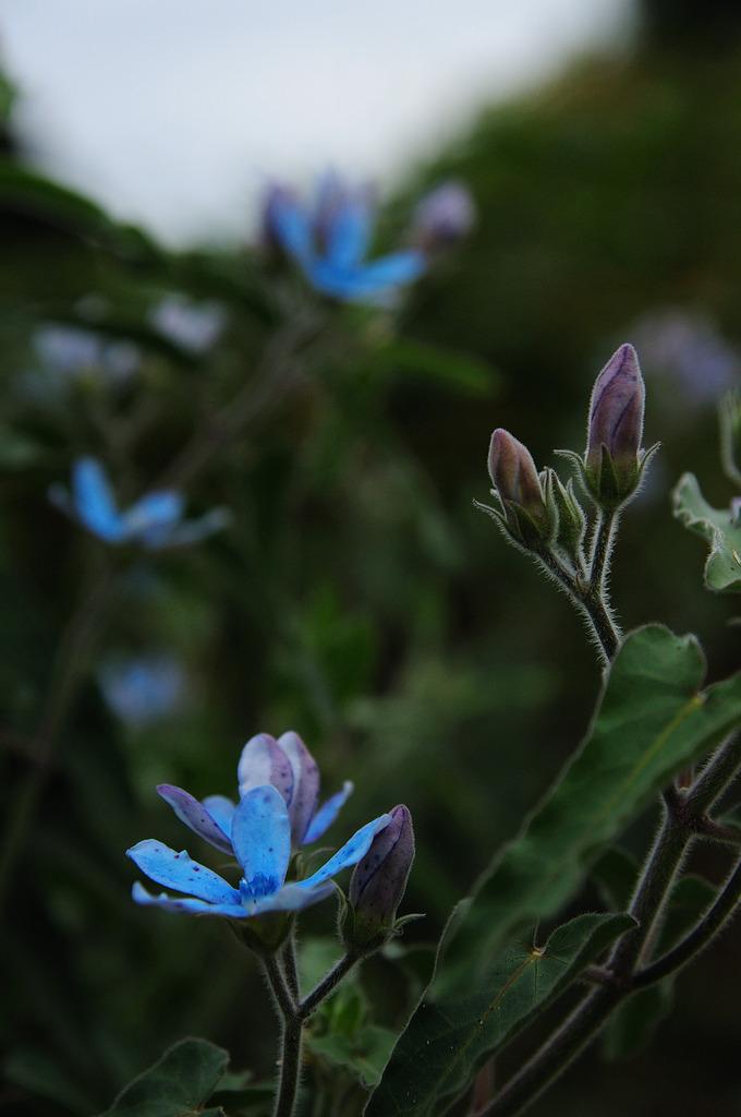 cerulean blue