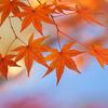 紅葉(東山植物園)