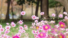 お散歩撮影(庄内緑地公園)
