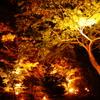 光の紅葉道