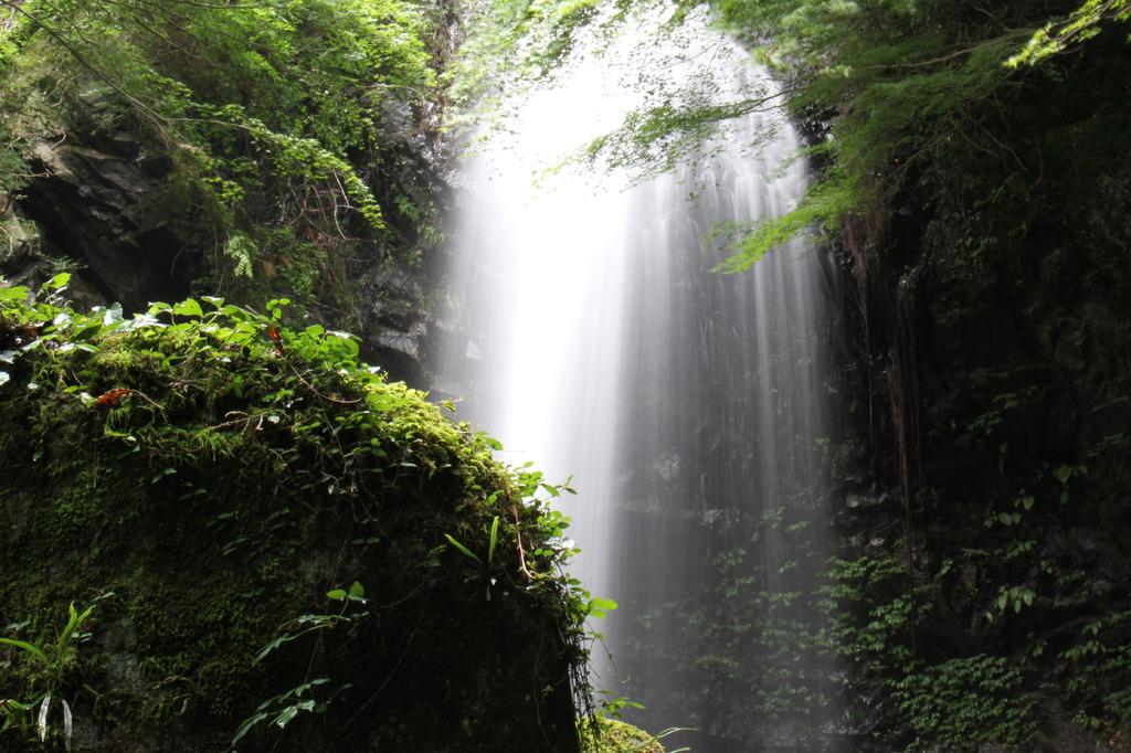 白藤の滝(三重) vol.2
