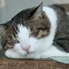 Sleeping Meow