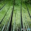 Lightup bamboo, Kyoto