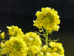 Yellow : F 5.6