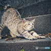 Finding Nagasaki Stray Cat