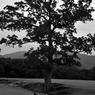 NIKON NIKON D700で撮影した風景(_DSC0141)の写真(画像)