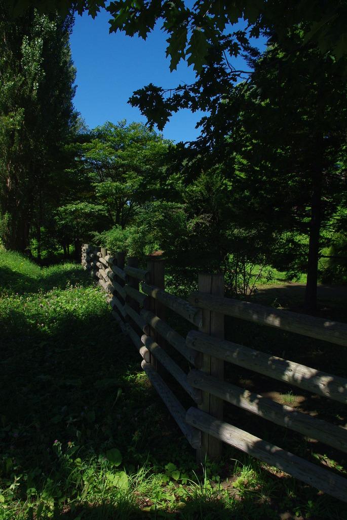 北海道*札幌*北大*ポプラ並木の横