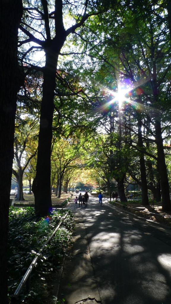 公園の木漏れ日