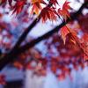 秋の終わり...