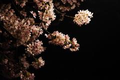 漆黒に浮かぶ花