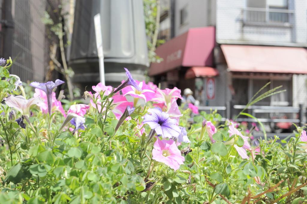 三ノ輪橋駅前にて