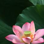 CANON Canon EOS Kiss X2で撮影した植物(咲く)の写真(画像)