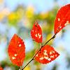 京都の秋2