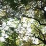 SONY DSLR-A700で撮影した風景(空。)の写真(画像)